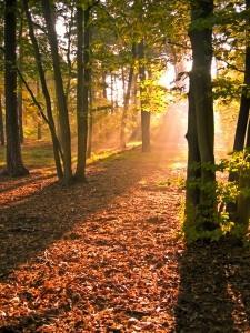Herbstlaub_freeimages-sxcOK